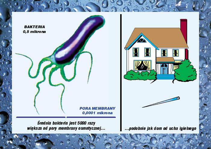 Porównanie wielkości bakterii do pory membrany oraz domu do ucha igielnego
